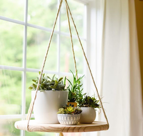 Unique Indoor Plant Containers