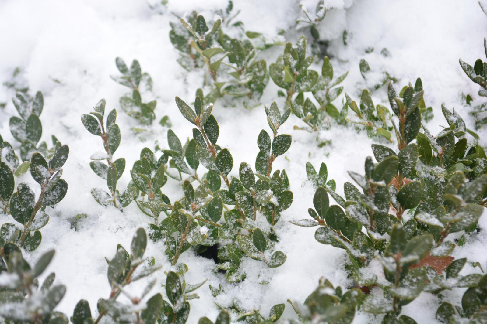 MOTM: Freeze-Proof Plants