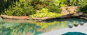 2015 Garden of the Year: Exotic Journey